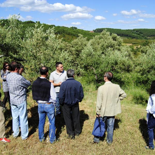 C.1.2 Visita de campo olivar Oleoturismo soleae