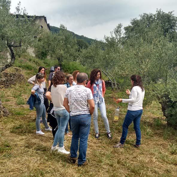 C.2.2 Visita de Campo Oleoturimo Soleae