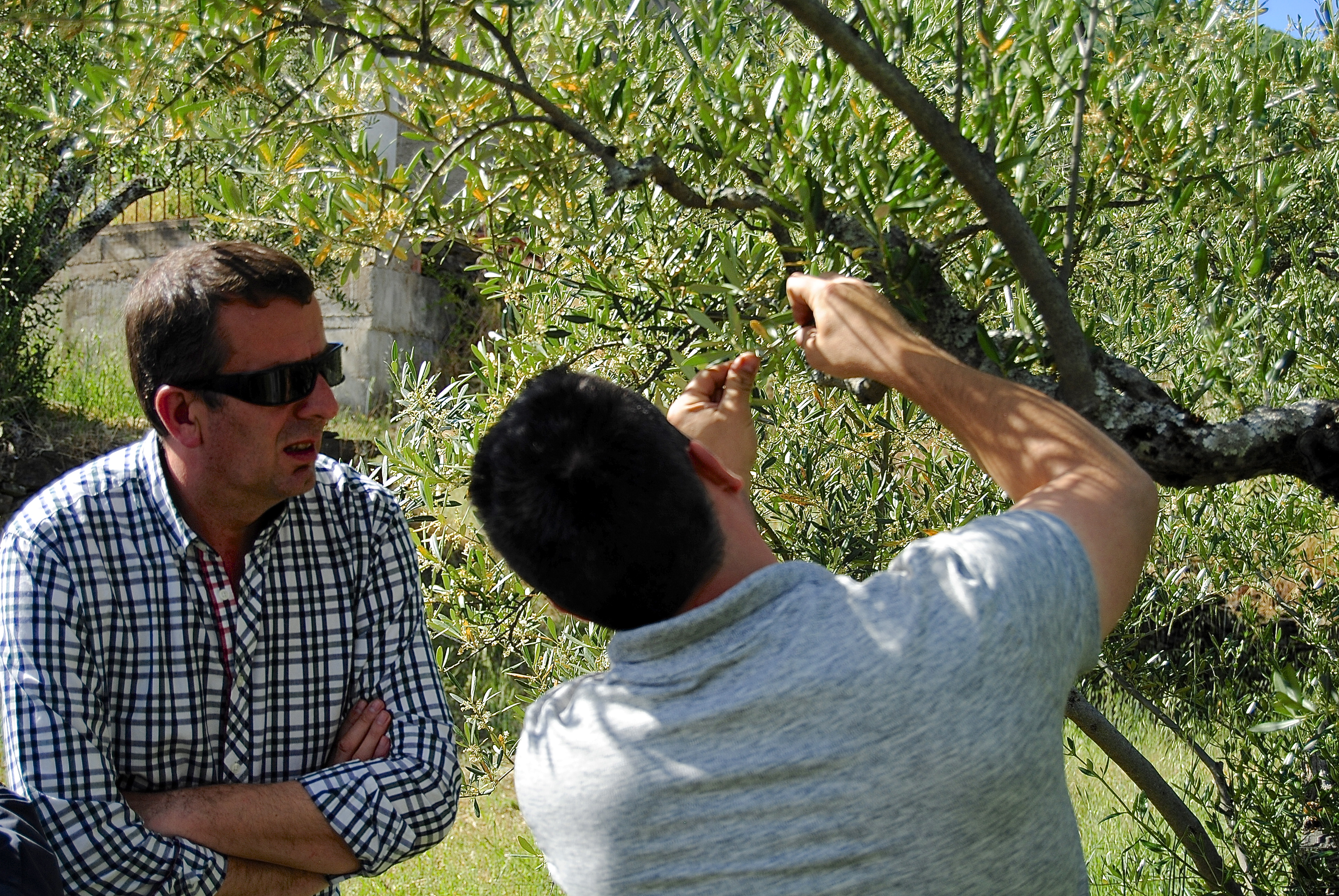 C.3.3 Vista Olivar Pareja Oleoturismo Soleae